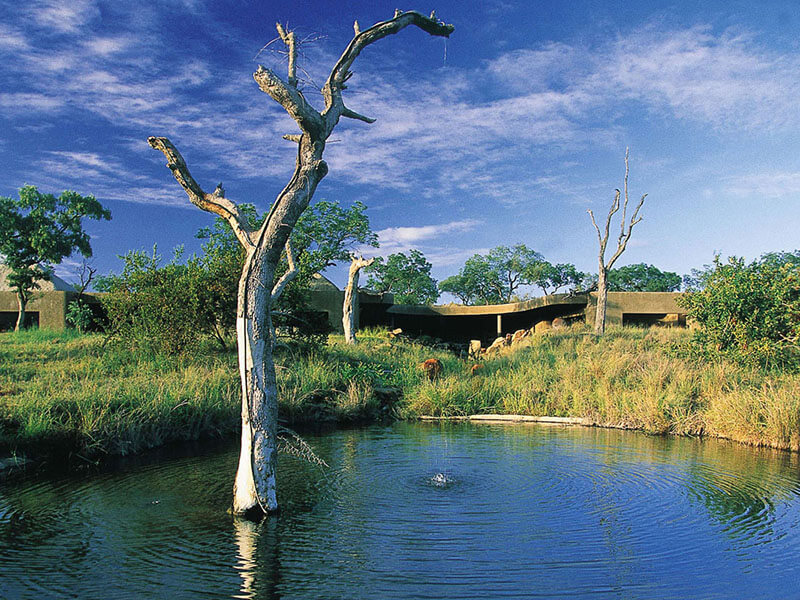 Sabi Sabi Earth Lodge View from Waterhole