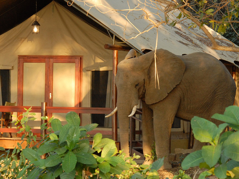 Lugenda Wilderness Camp Elephant