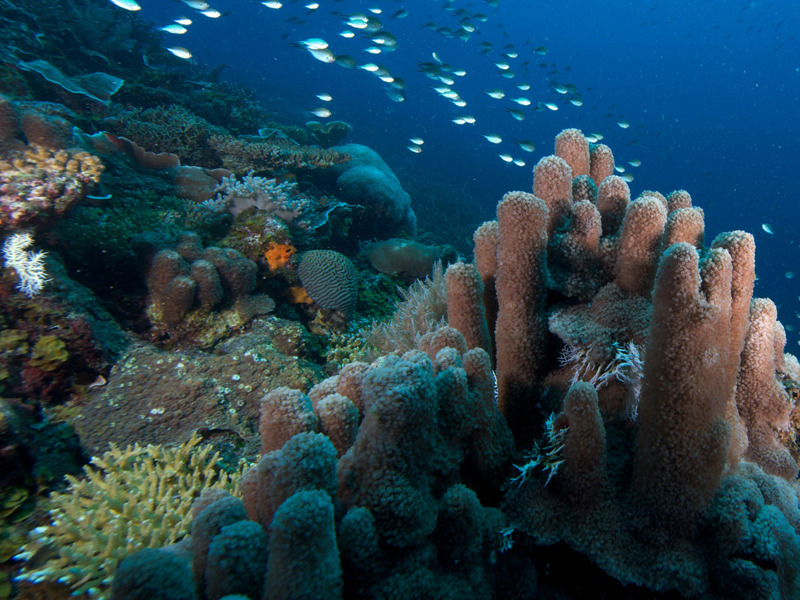 Medjumbe Private Island Diving