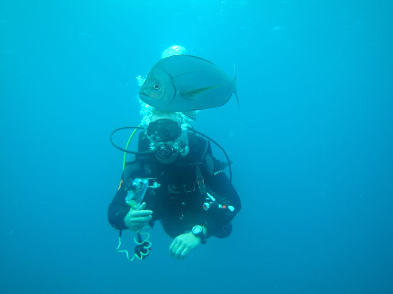 Villa do Parasio Diving with Fish