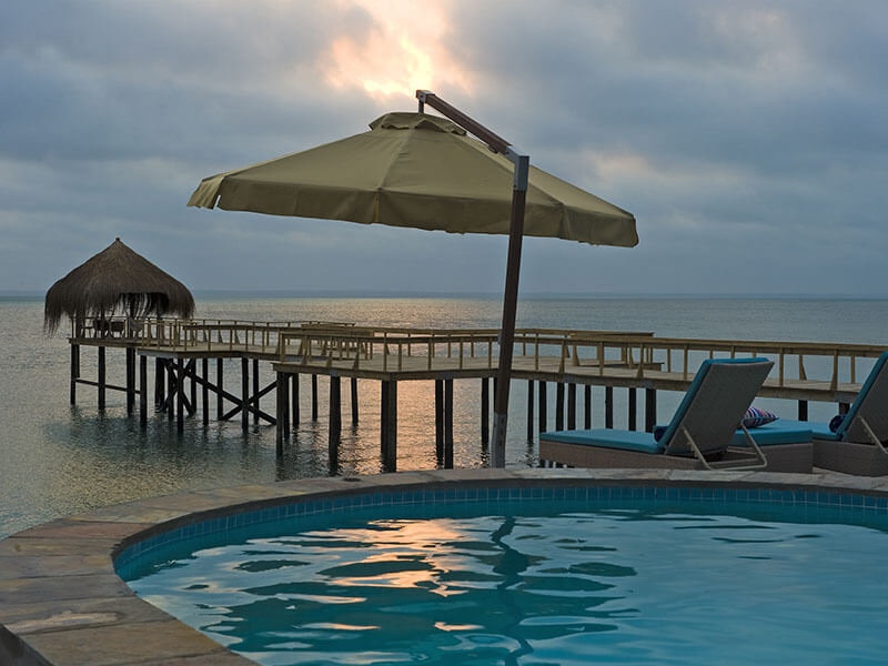 dugong umbrella