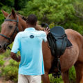 White Pearl Resort Horseriding