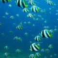Inhambane fish