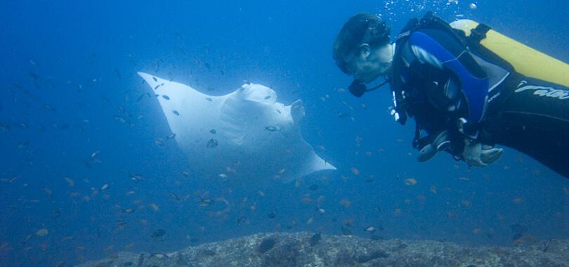 tofo scuba diving