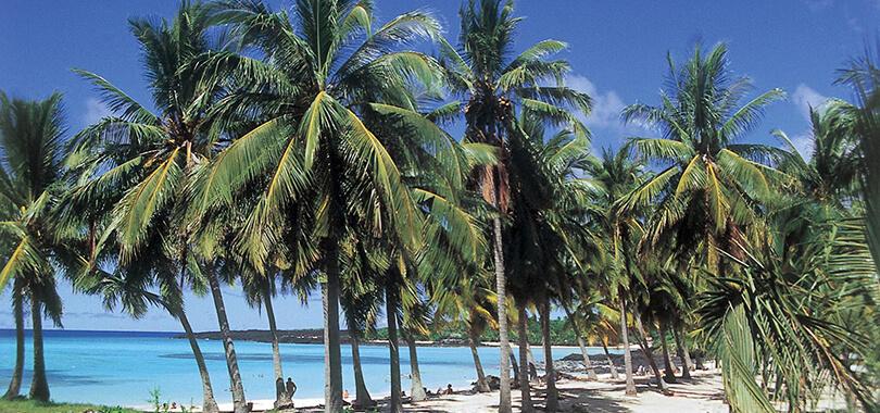 Palms at Bazaruto