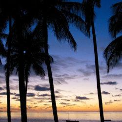 Archipelago Resort palm trees at sunset