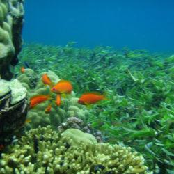 Diving Ibo Island