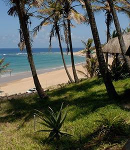 Jeff's Palm Resort