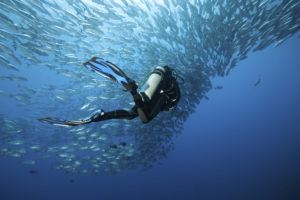 Diver with shoul of fish