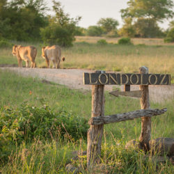 Londolozi-Game-Safaris
