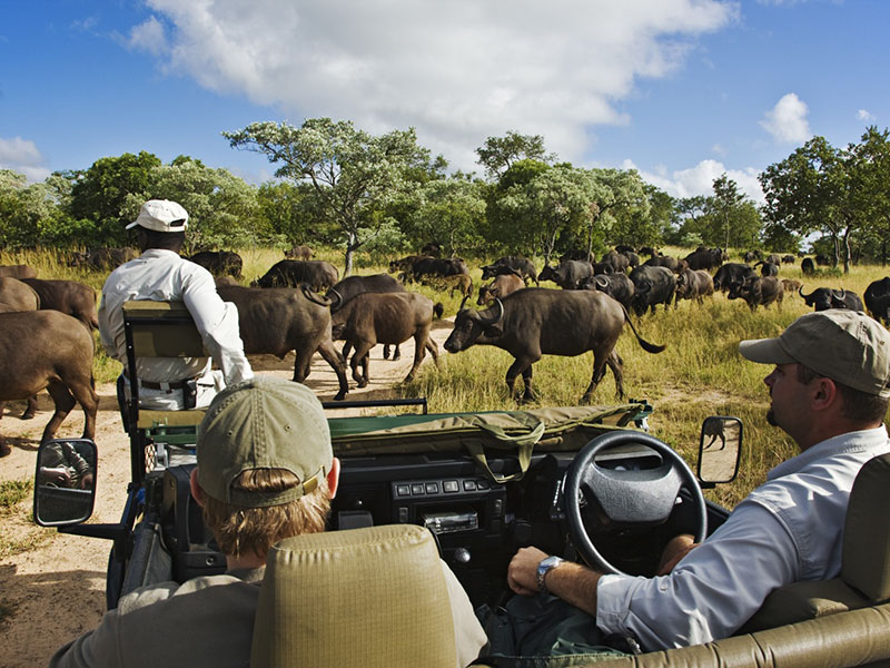 Royal Malewane Game Drive